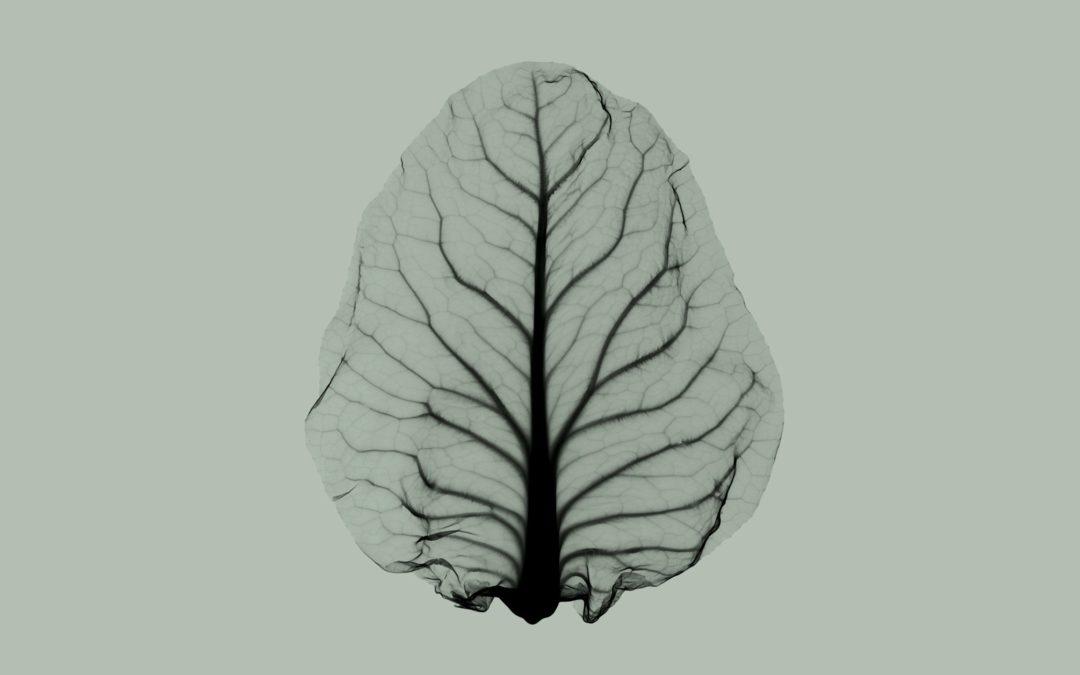 Can Lettuce Survive Climate Change?