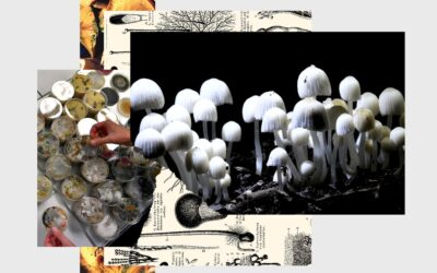 Hackers, Mason Jars, and the Science of DIY Shrooms