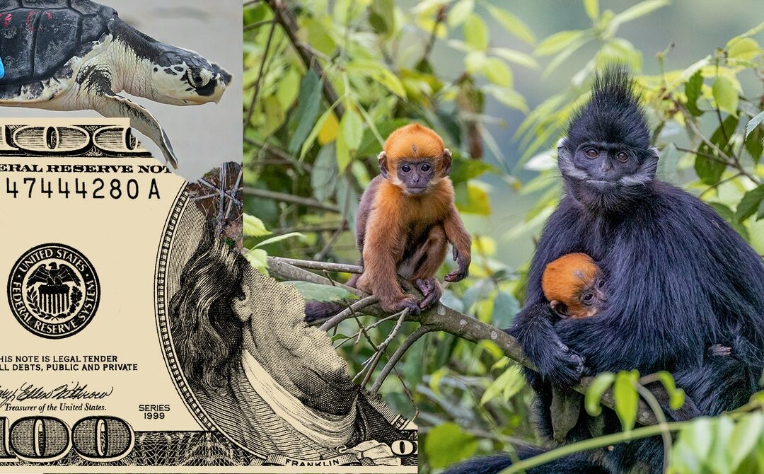 Humans Need to Create Interspecies Money to Save the Planet